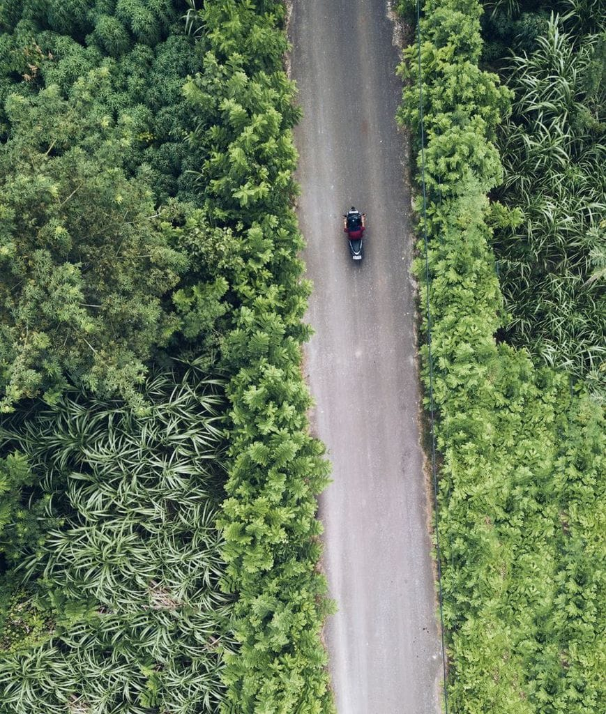 Jungle road a motorbike from above